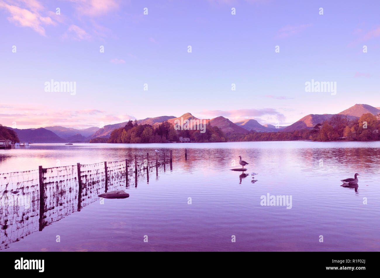A beautiful sunrise at Derwentwater looking towards Derwent Isle and Catbells, Lake District, England, UK - Stock Image