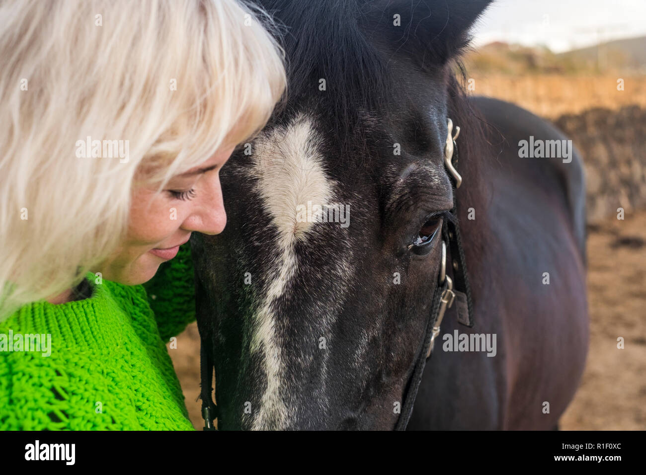 Lovely Horse High Resolution Stock Photography And Images Alamy