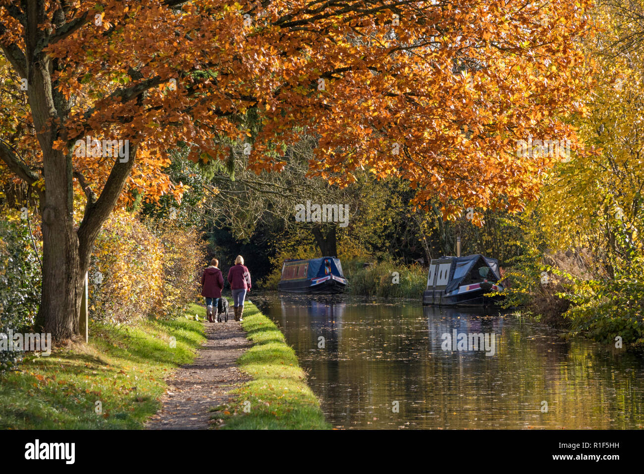 Autumn on the Stratford upon Avon Canal between Hockly Heath and Lapworth, Warwickshire, England, UK - Stock Image