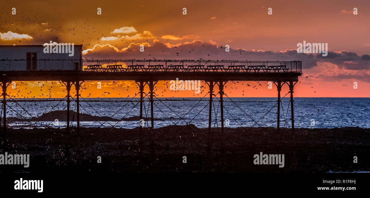 A murmuration of Starlings on the West Coast of Wales in a small seaside town of Aberystwyth, Ceredigion. This is a general sight every year as this i Stock Photo