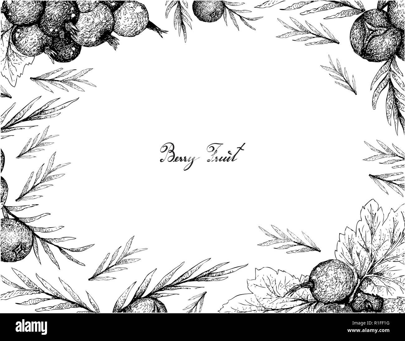 Berry Fruit, Illustration Frame of Hand Drawn Sketch of Jostaberries and Juniper Berries Isolated on White Background. - Stock Vector