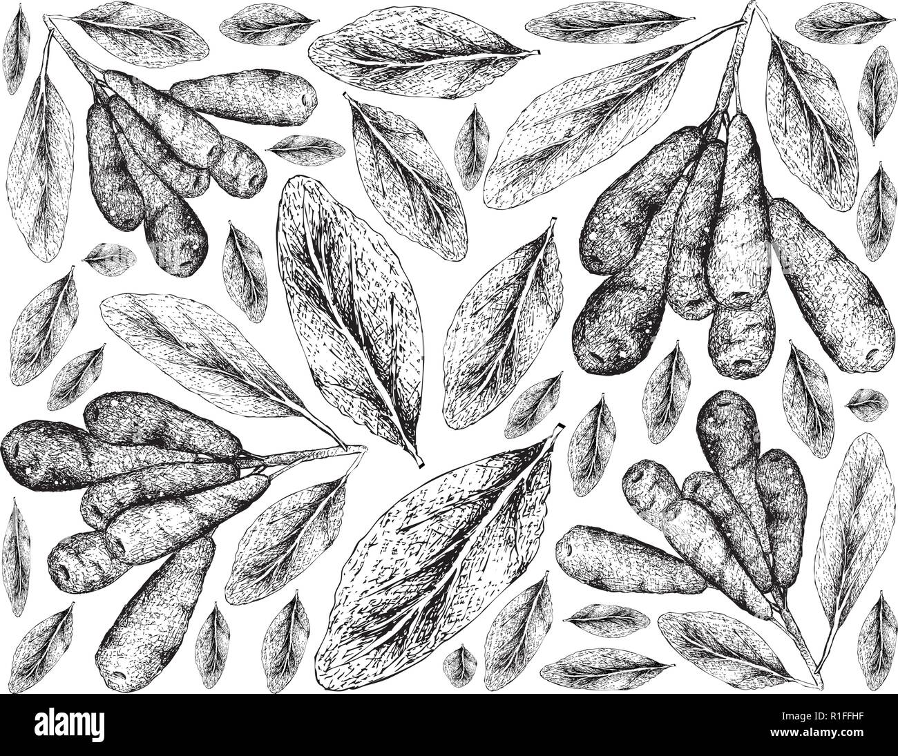 Tropical Fruit, Illustration Wallpaper of Hand Drawn Sketch Honeyberry, Haskap Berry or Lonicera CaeruleaFruits Isolated on White Background. Used for - Stock Vector