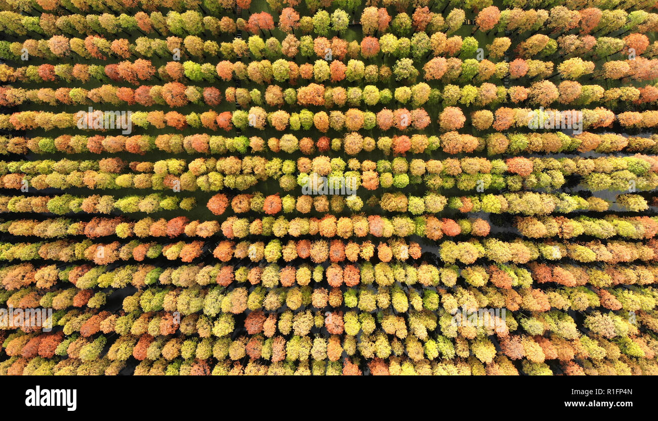 Yangzhou. 12th Nov, 2018. Aerial photo taken on Nov. 12, 2018 shows the scenery of the dawn redwood forest at Luyang Lake Wetland Park in Yangzhou, east China's Jiangsu Province. Credit: Meng Delong/Xinhua/Alamy Live News - Stock Image