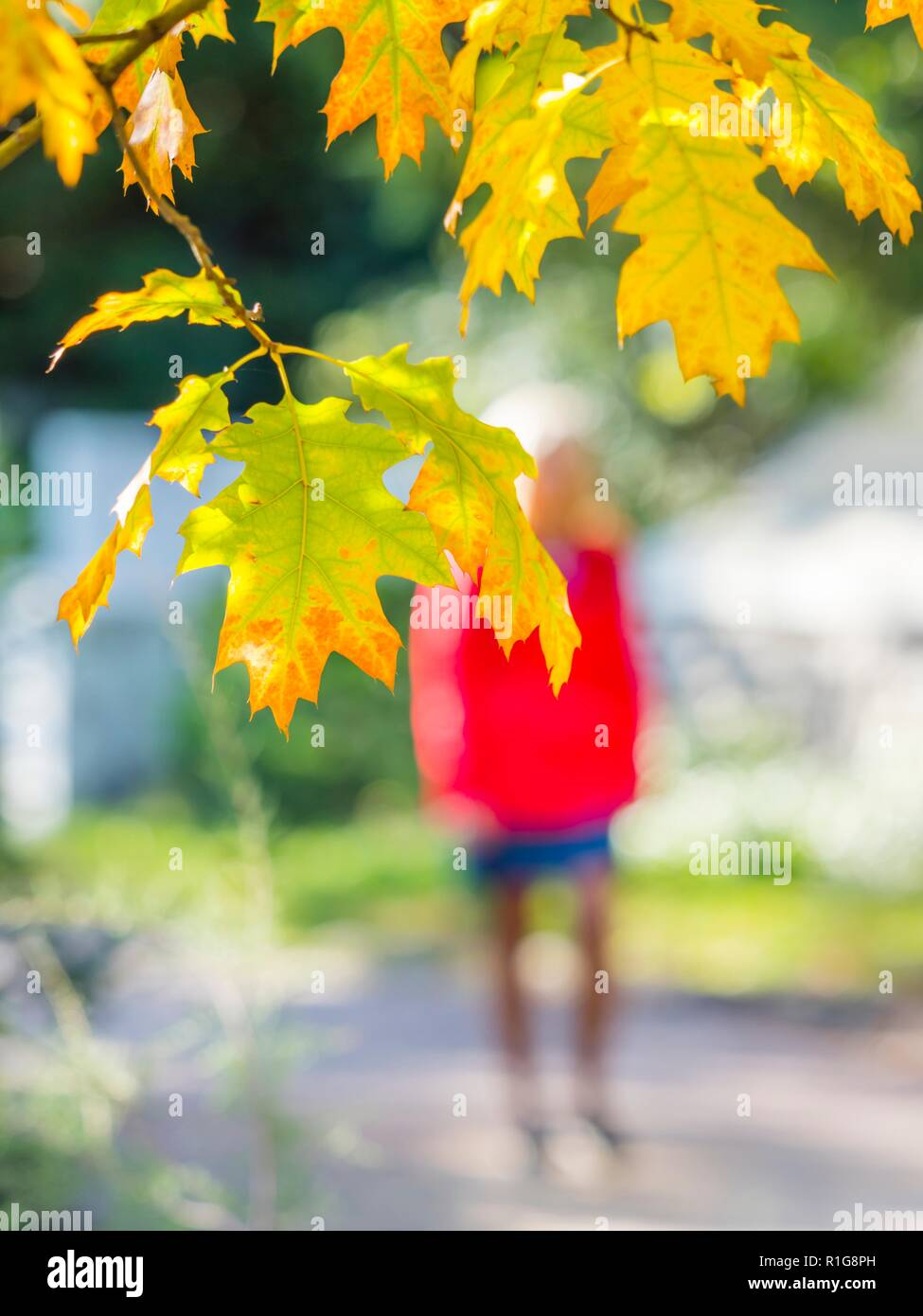 Autumn leaves and passing walking woman blurred unrecognized in background in Red clothing coat - Stock Image