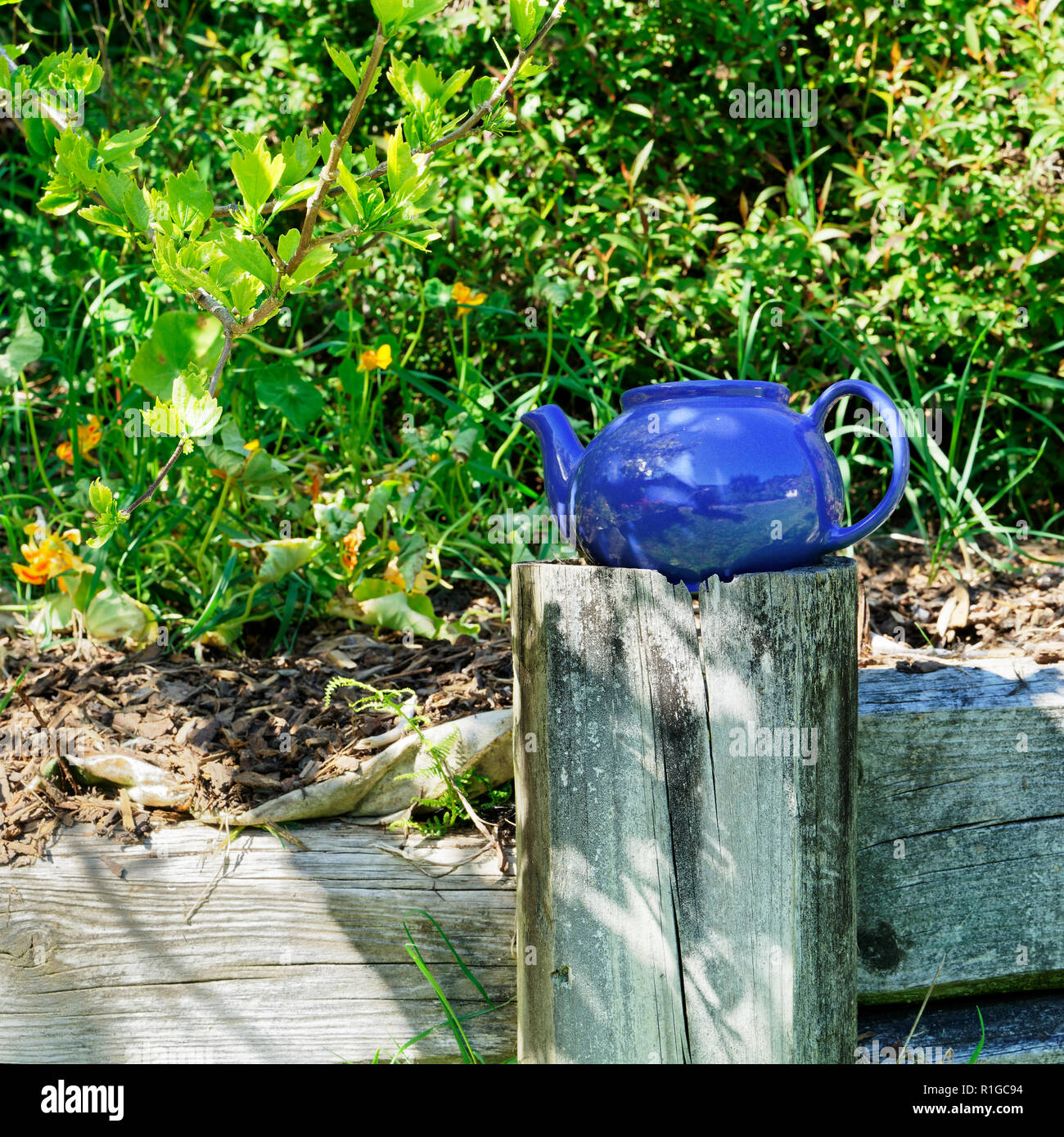 Blue teapot on a fence post in a flower garden - Stock Image