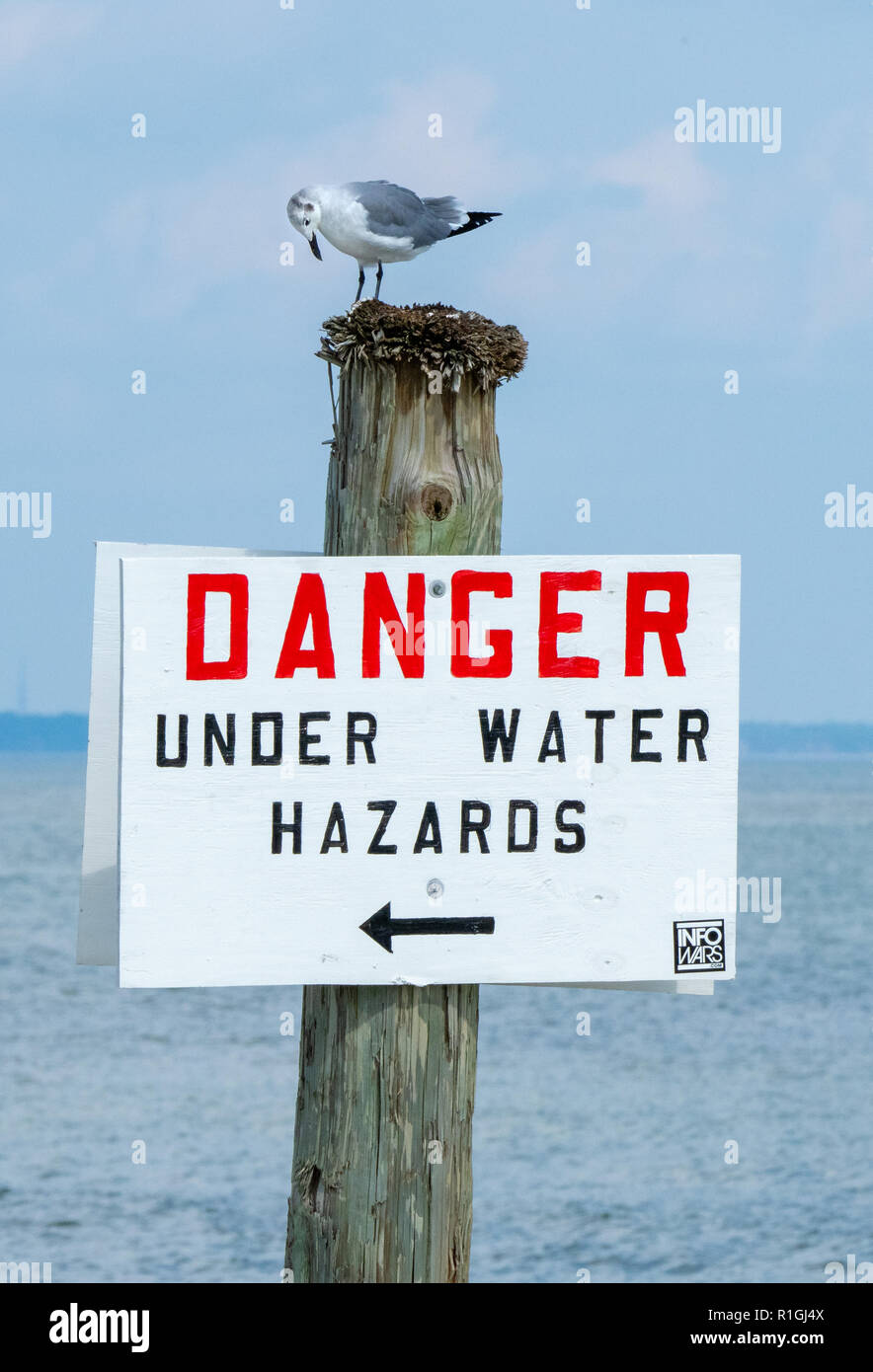 Gull looking down at an under water hazards sign on Tybee Island near Savannah on the Georgia coast of southern USA - Stock Image