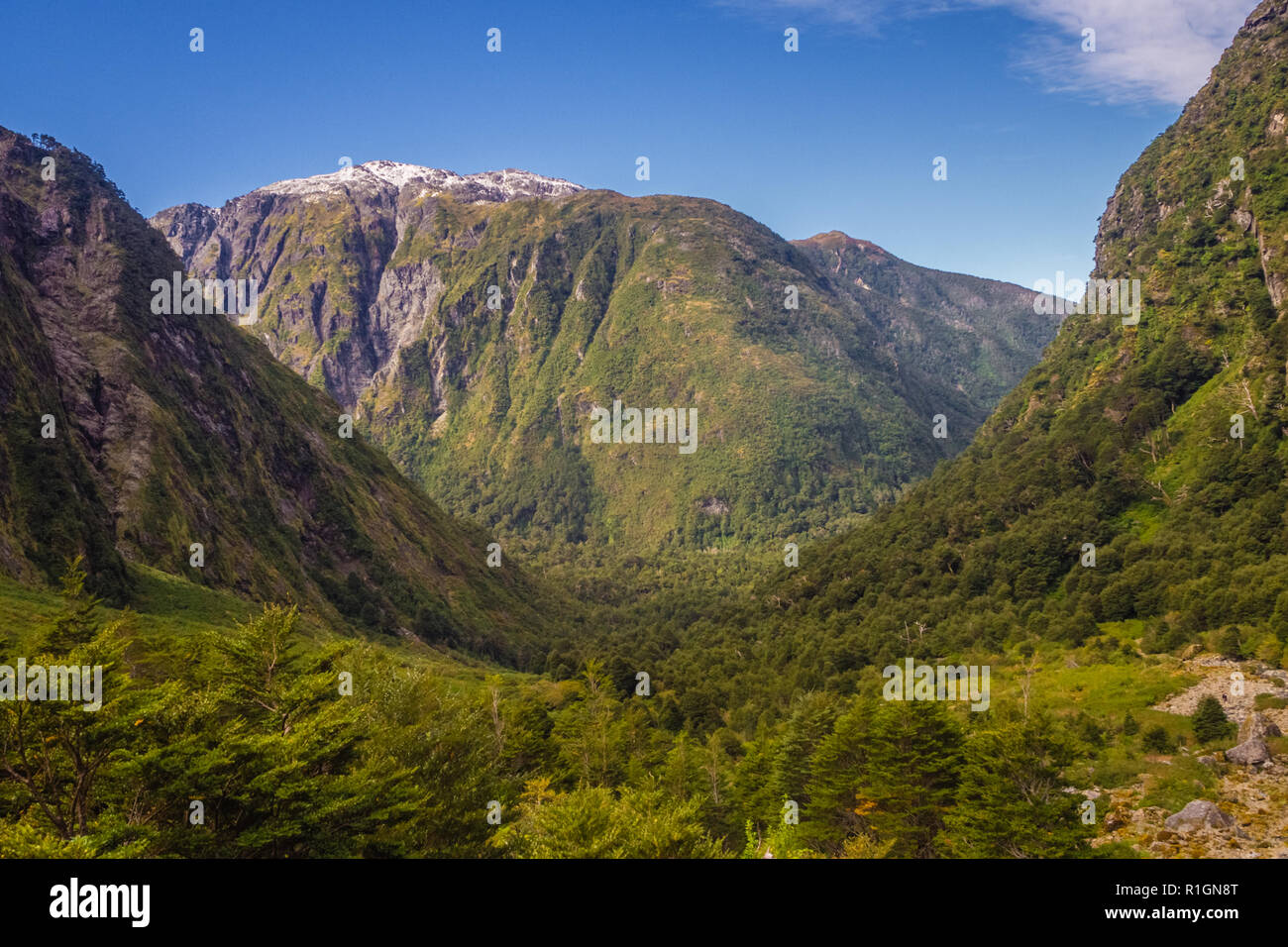 Enchanted Forest - Queulat National Park - Carretera Austral Chile, Patagonia - Stock Image