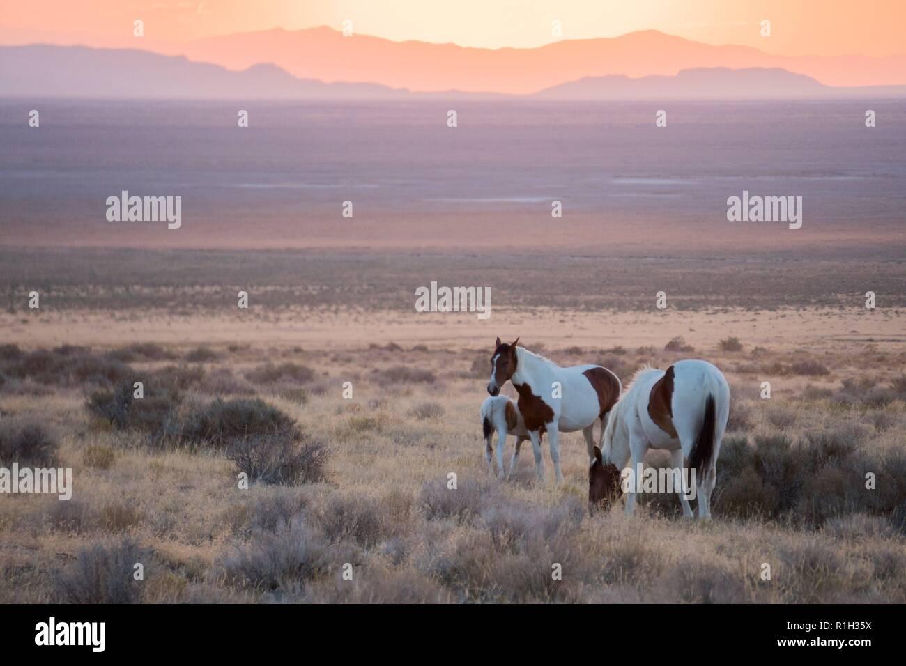 Image result for wild horses on prairie sunset