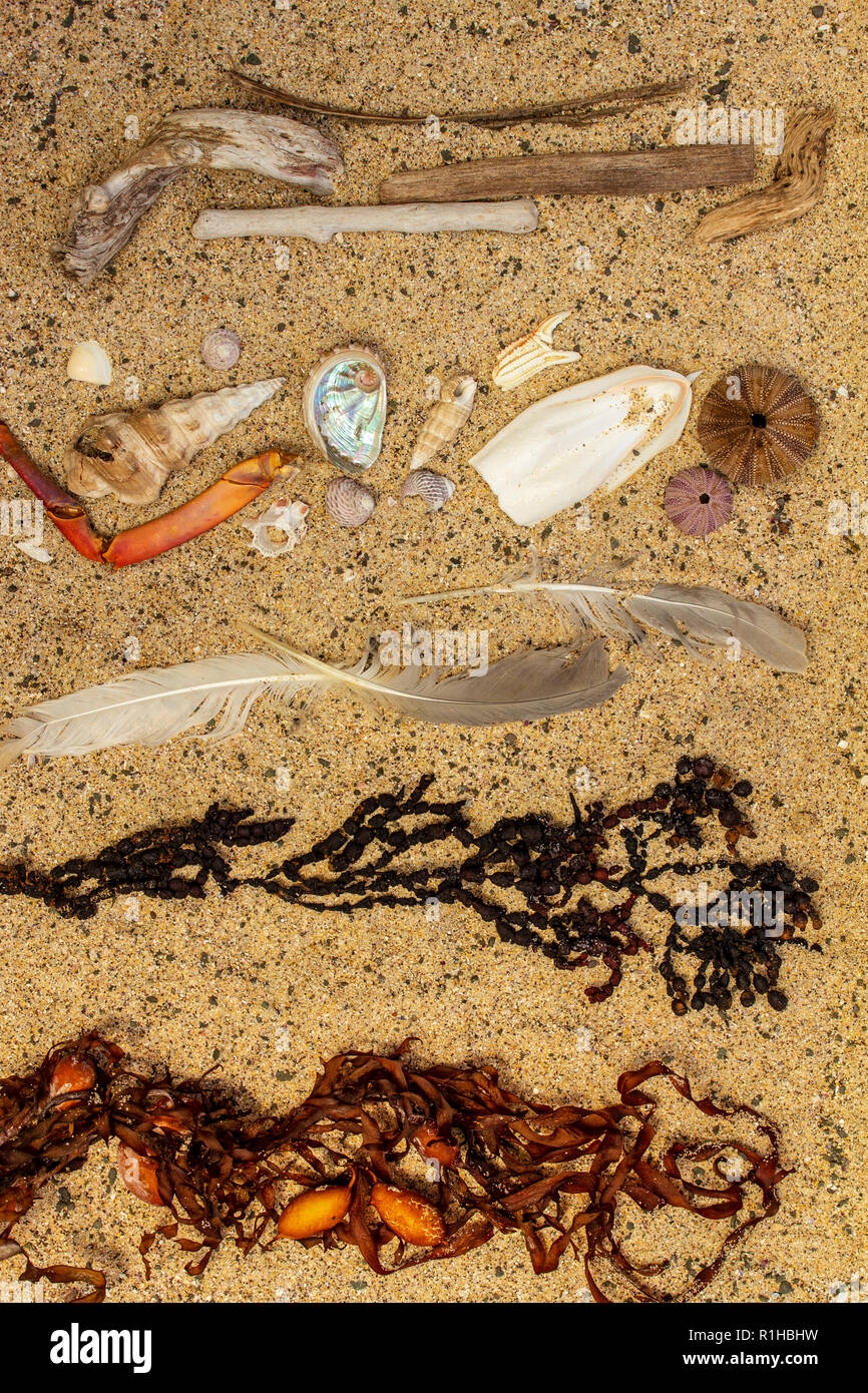 Real beach debris, seaweed, shells, wood, separated and sorted with plastic pollution removed. - Stock Image