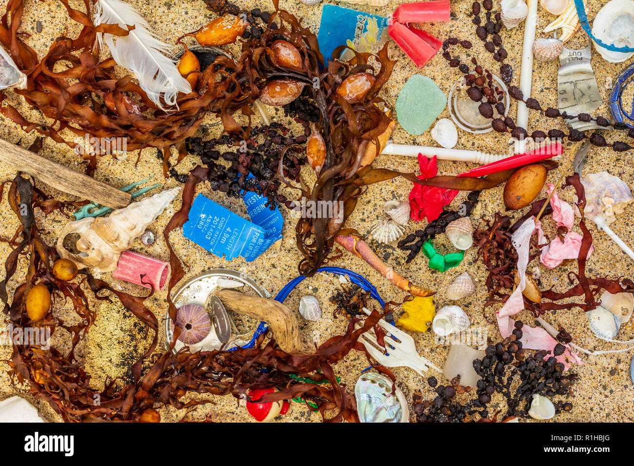 Real plastic pollution, including single use plastic, washed up on beach mixed with seaweed shells and feathers - Stock Image