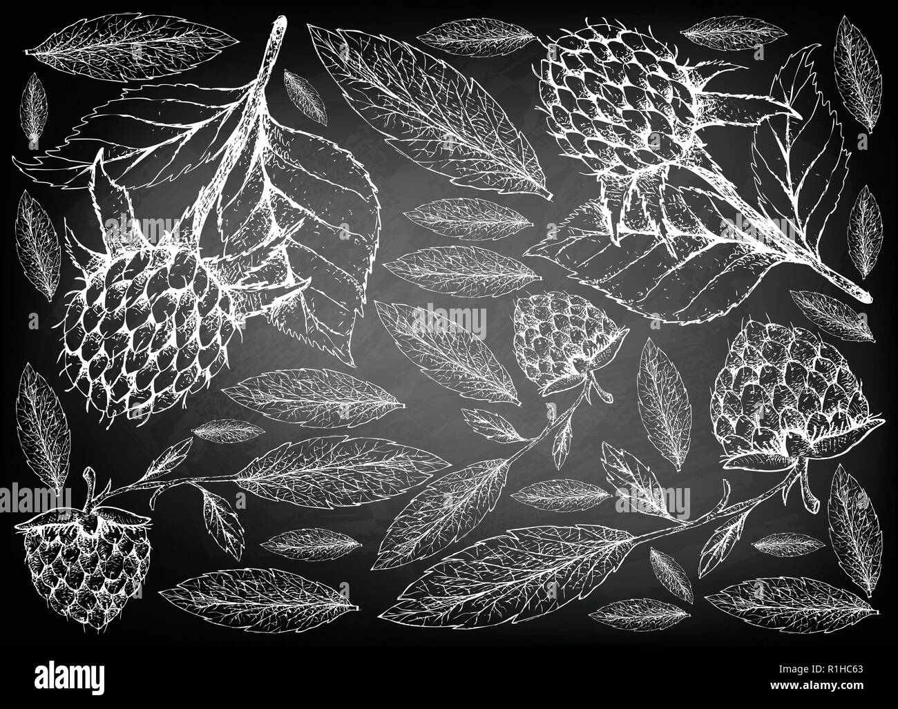 Berry Fruits, Illustration Wallpaper of Hand Drawn Sketch  Fresh Korean Black Raspberries or Rubus Coreanus and Golden Raspberries or Rubus Ellipticus - Stock Vector