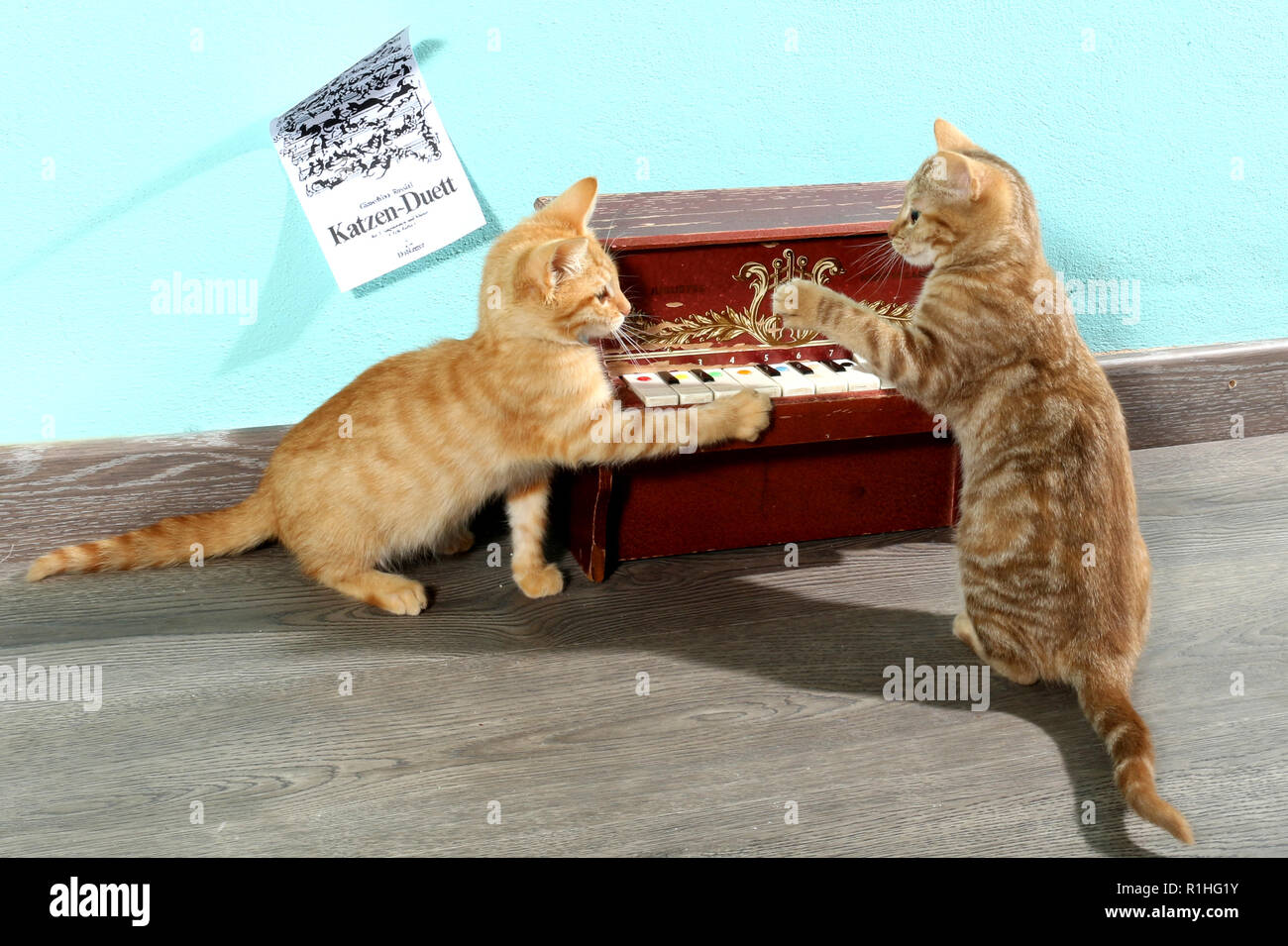 two kittens playing with a mini piano Stock Photo
