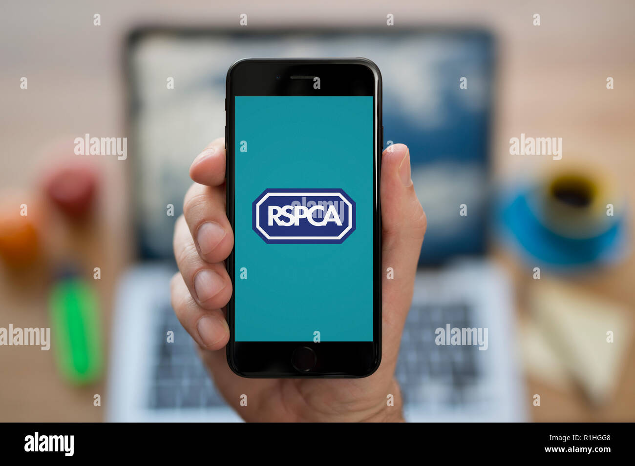 A man looks at his iPhone which displays the RSPCA logo, while sat at his computer desk (Editorial use only). - Stock Image