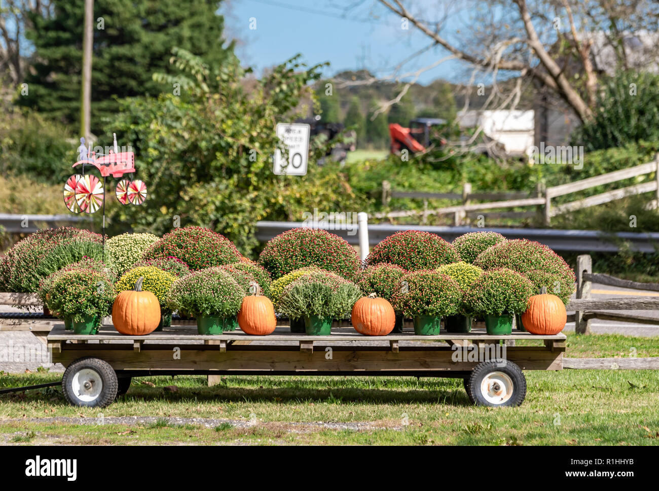 wagon with pumpkins and mums in East Hampton, NY - Stock Image