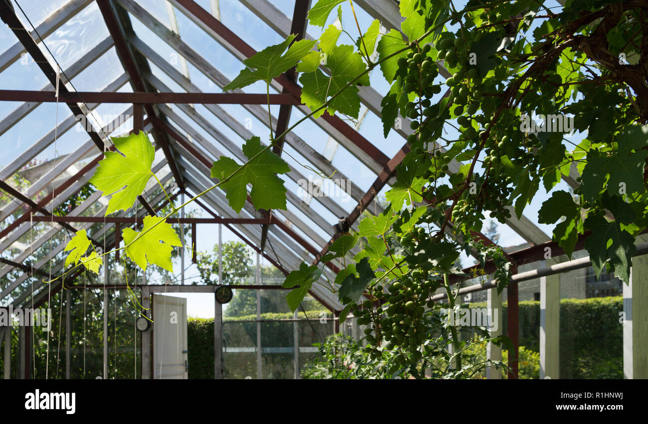 Prime Natural Small Greenhouse With Tomatoes Plants And Tree Of Interior Design Ideas Philsoteloinfo