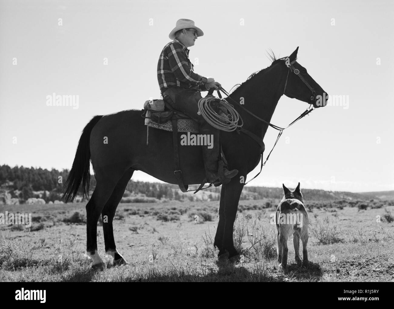 Mature cowboy sitting on a horse next to his dog in a remote field. - Stock Image