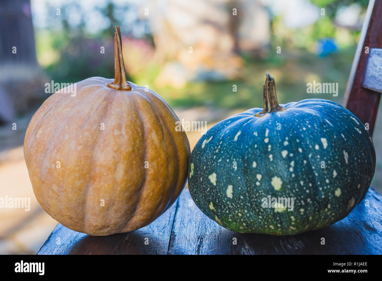 Countryside's Organic Yellow and green pumpkins together for creative use. - Stock Image