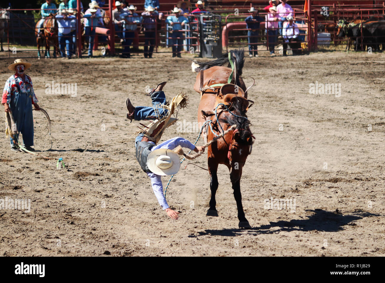 Falling Off Of Horse High Resolution Stock Photography And Images Alamy