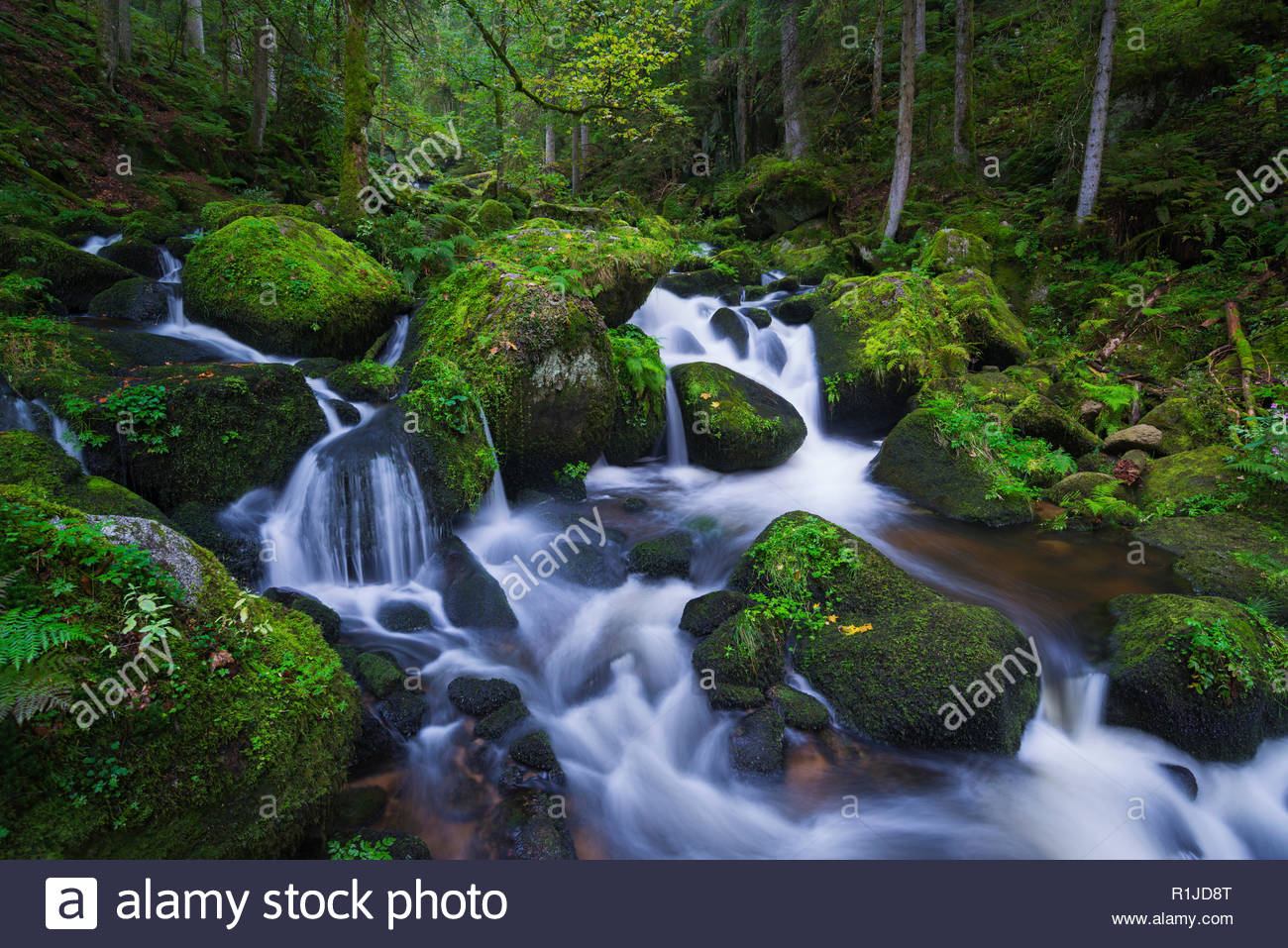 Upper course of the Triberg waterfalls in blue hour, Triberg, Black Forest, Baden Württemberg, Germany - Stock Image