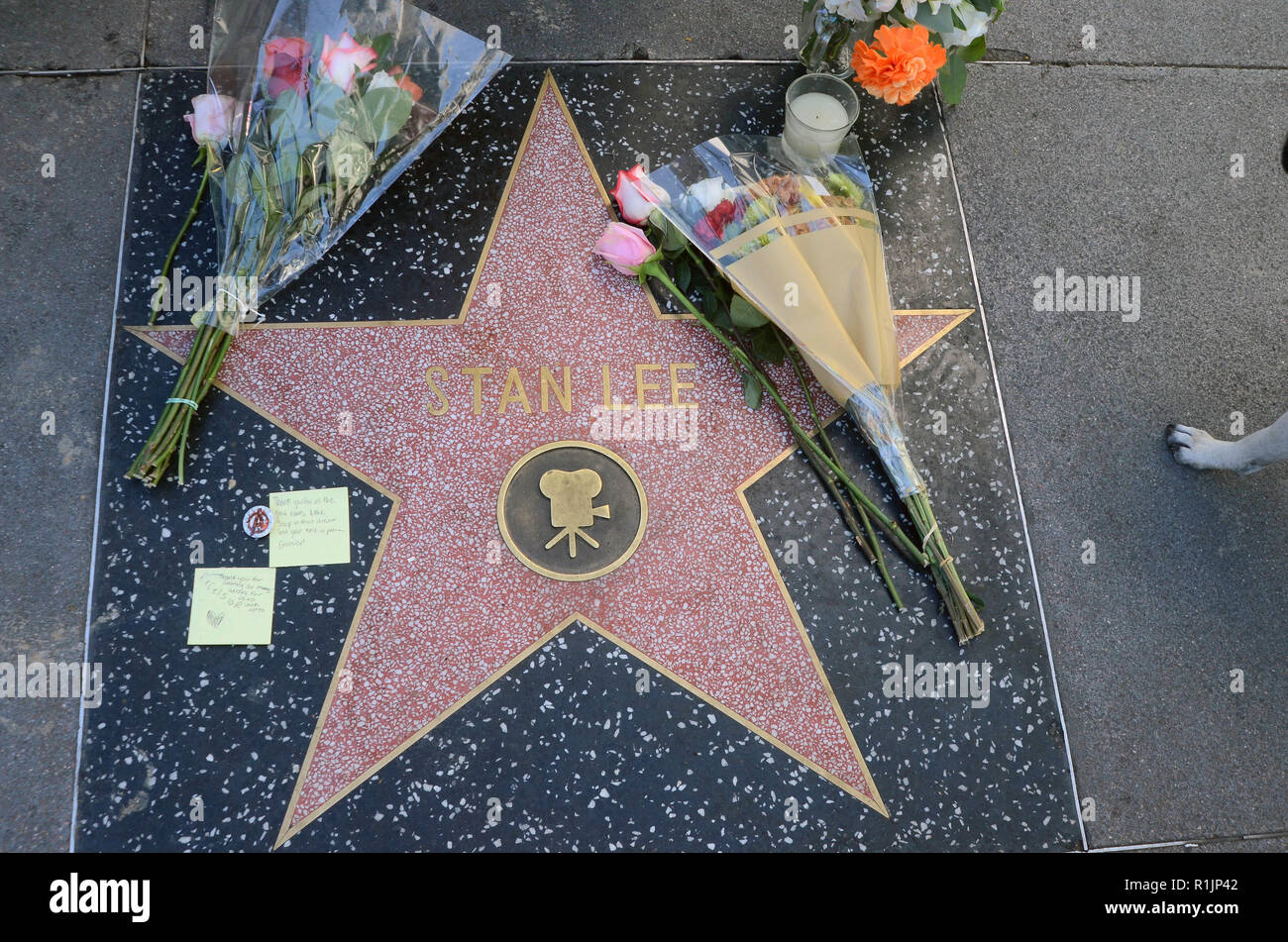 Hollywood, California, USA. 12th Nov, 2018. Flowers placed on Stan Lee's Star on the Hollywood Walk of Fame after passing at the age of 95 in Hollywood, California on November 12, 2018. Credit: David Edwards/Media Punch/Alamy Live News - Stock Image