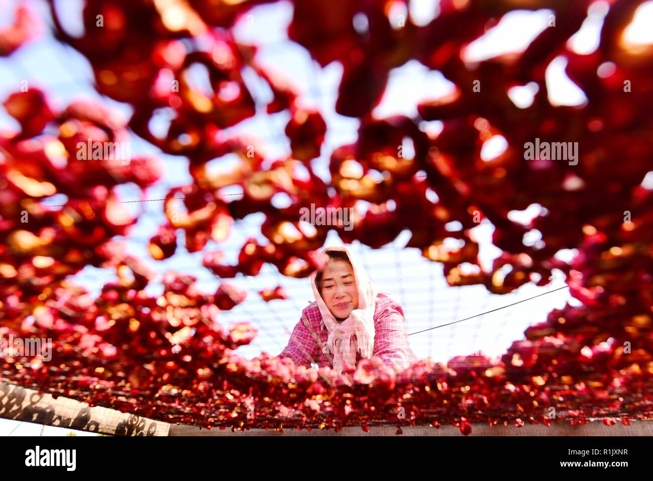 Weifang, Weifang, China. 13th Nov, 2018. Weifang, CHINA-Peasants are busy with making and processing dried hawthorn slices in Weifang, east China's Shandong Province. Credit: SIPA Asia/ZUMA Wire/Alamy Live News - Stock Image