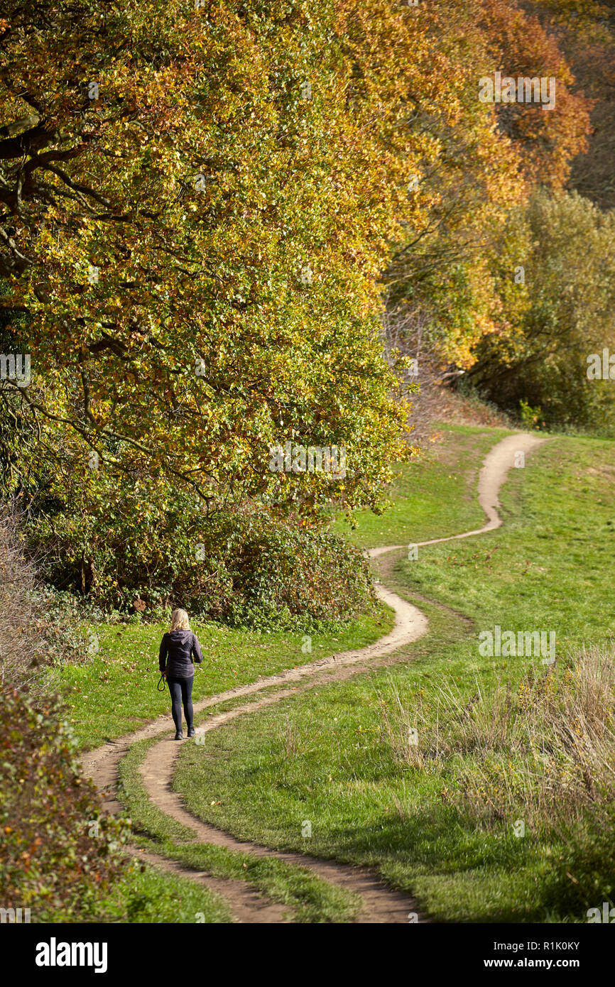 UK Weather: A beautiful autumn day in Hampstead Heath, North London, 13th November 2018. Where the trees are in full colour and people are enjoying the good autumn weather. Credit: David Bleeker Photography.com/Alamy Live News Stock Photo