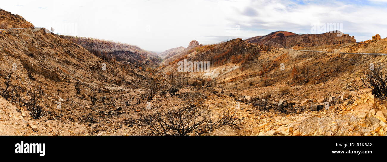 Burned trees in mountain desert, Panorama in Teide Volcano, Tenerife, Canarian Islands Stock Photo