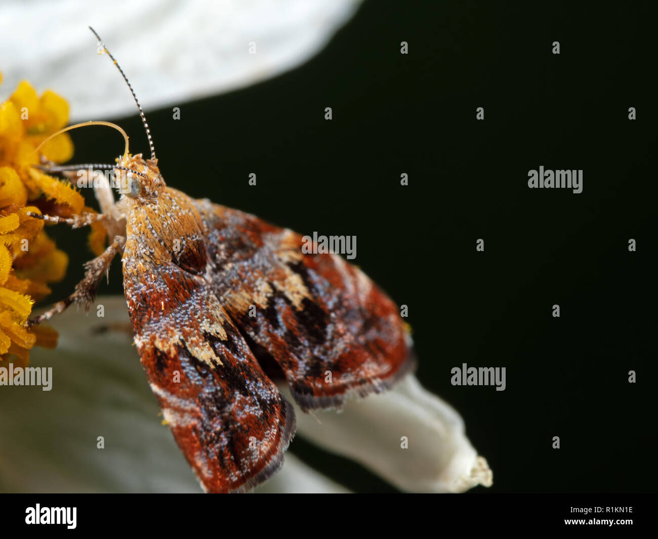 Macro Photography of Butterfly Sucking Nectar from Flower - Stock Image