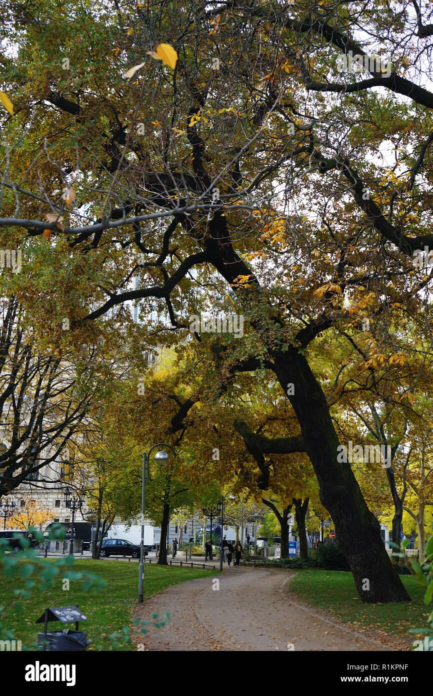 Weg und alte, herbstlich gelb gefärbe Eiche in der Bockenheimer Anlage, Frankfurt am Main, Deutschland - Stock Image