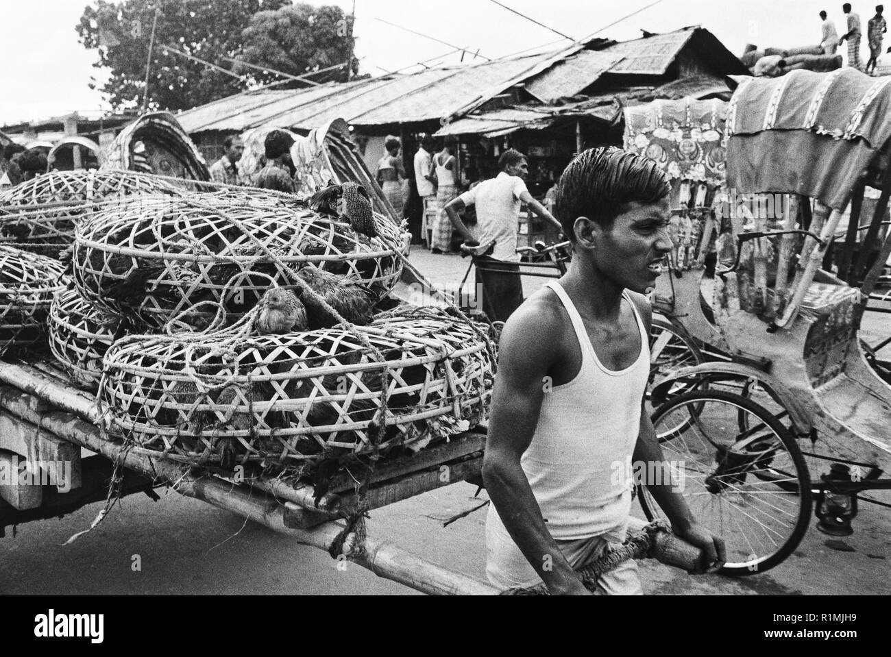 6/6 Transporting poultry by hand cart  Dhaka 1980 - Stock Image
