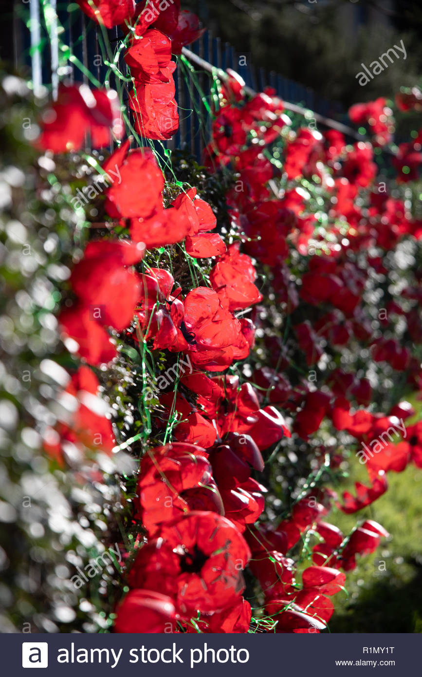 An image of a red poppies display made out of bottle ends so eco friendly and recyclable. - Stock Image