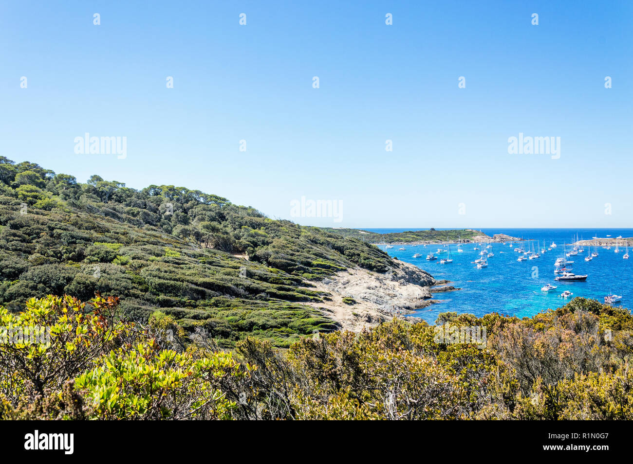 Seacoast in summer of the island of Porquerolles - Stock Image