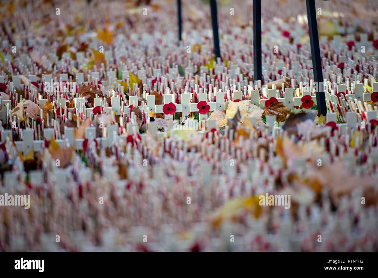 Poppies & wreaths left at memorials to mark Armistice Day & Remembrance of the fallen soldiers in the World Wars - Stock Image