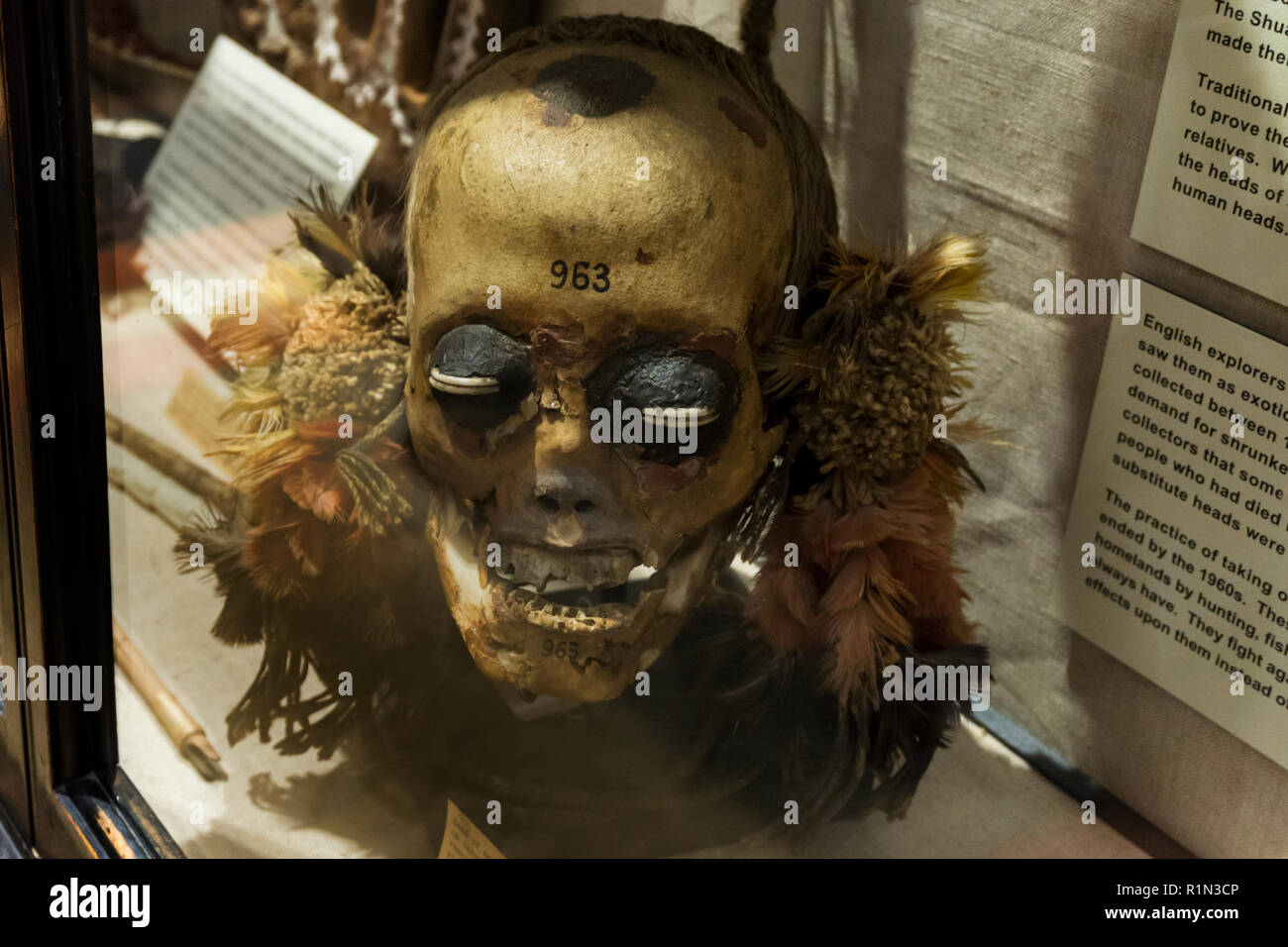 A trophy skull in a display case at the Pitt-Rivers Museum. Originally from the Mundurucu indians, a head-hunting tribe of Brazil until the 1960s. - Stock Image