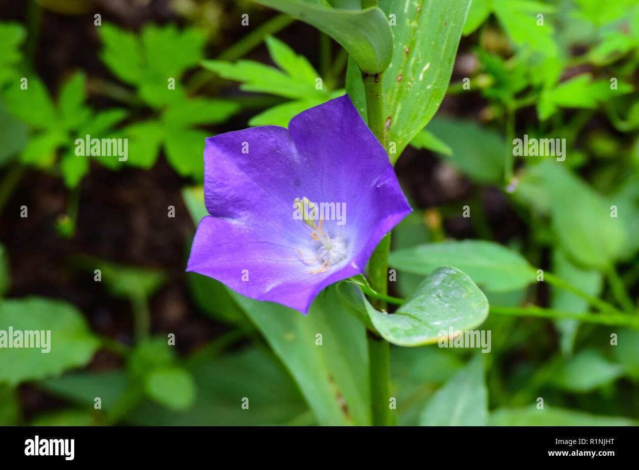 Gardens - Stock Image
