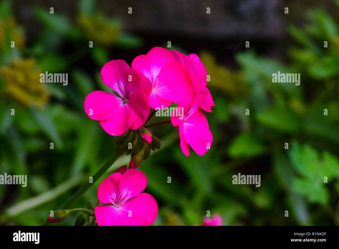 flowers blooming in the garden - Stock Image