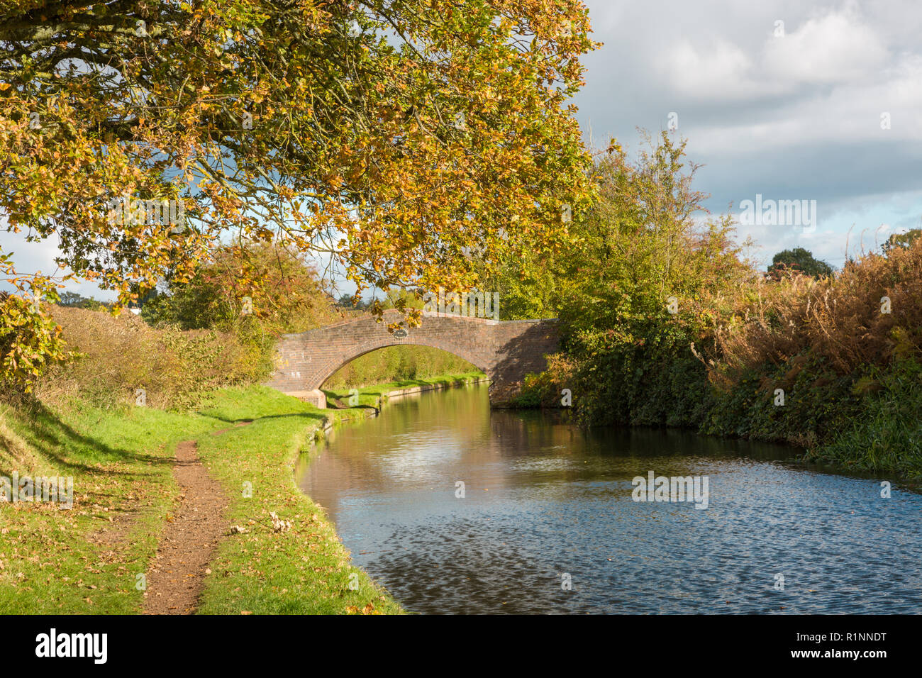 Canal towpath, autumn, late summer, Staffordshire and Worcestershire canal, UK, near wolverhampton - Stock Image