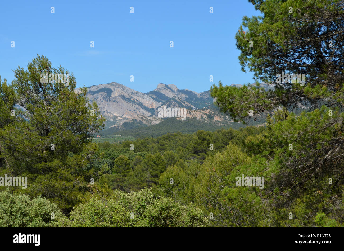 Pine forests in Els Ports Natural Park, a limestone mountain massif at the border between Aragon and Catalonia - Stock Image