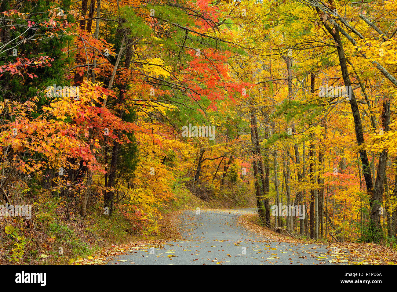 Foothills Parkway in autumn, Great Smoky Mountains National Park, Tennessee, USA Stock Photo