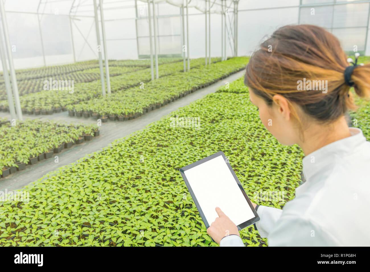 Female Biotechnology engineer tablet greenhouse. Plant seedlings growing greenhouse spring. - Stock Image