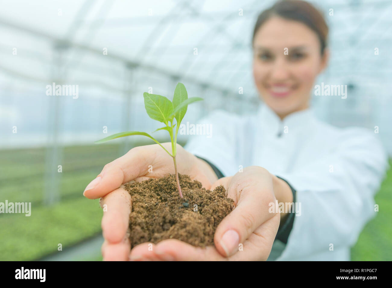 Woman hands holding green plant in soil. New life concept. - Stock Image