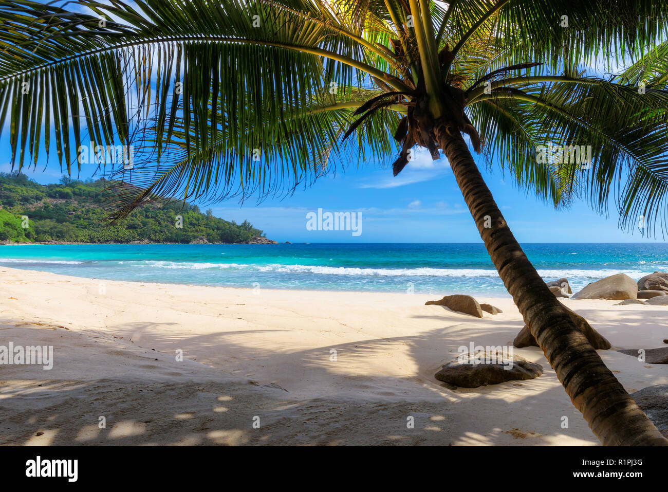 Exotic tropical beach - Stock Image