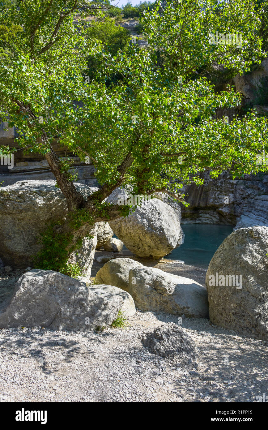 idyll with tree and rocks at the riverside, Gorges de la Méouge, Provence, France - Stock Image