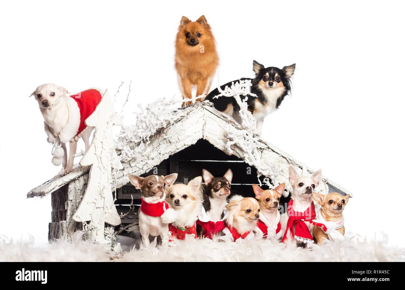 Dogs Group Christmas Stock Photos & Dogs Group Christmas Stock ...