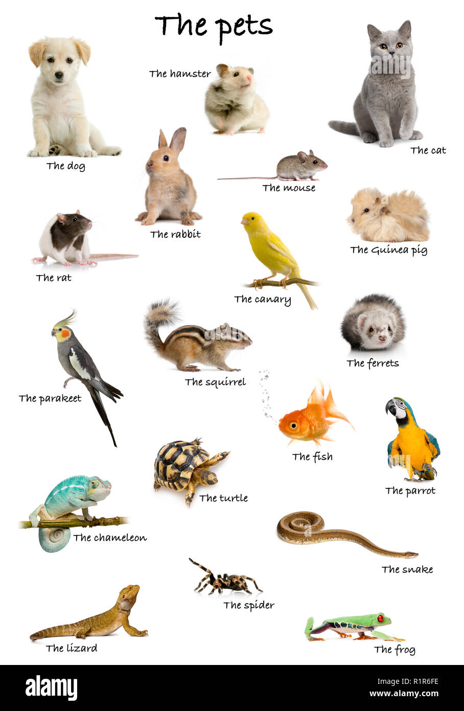 Italian English Animsld: Animal Mammals Collage Stock Photos & Animal Mammals