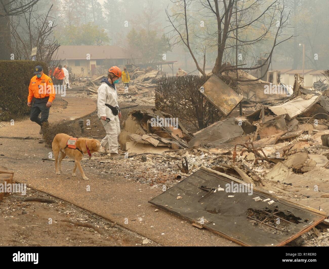 Paradise, USA. 13th Nov, 2018. Rescue workers walk through the burnt-out rubble of a residential complex with a sniffer dog. Paradise has become a ghost town. Only fire engines and fire engines drive through the spooky landscape. Residents are not allowed to return for the time being. (to dpa 'Paradise as hell on earth - 'Will create a new church' of 14.11.2018) Credit: Barbara Munker/dpa/Alamy Live News - Stock Image