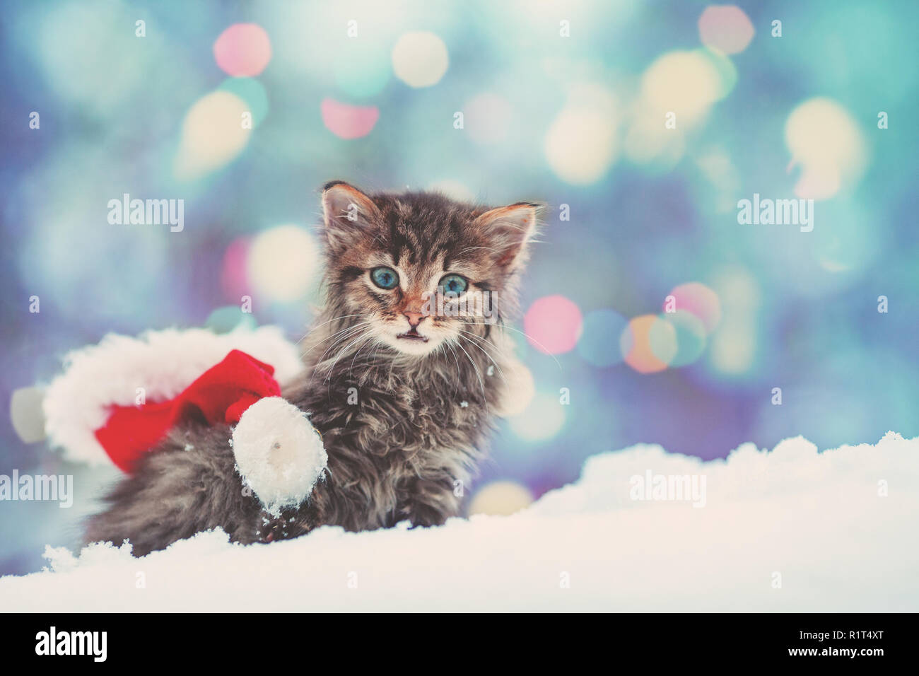 Little kitten with Santa Claus hat outdoors in snowy winter - Stock Image