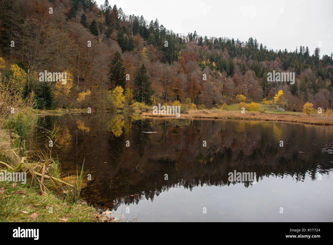 Nonnenmattweiher in south part from germany - Stock Image