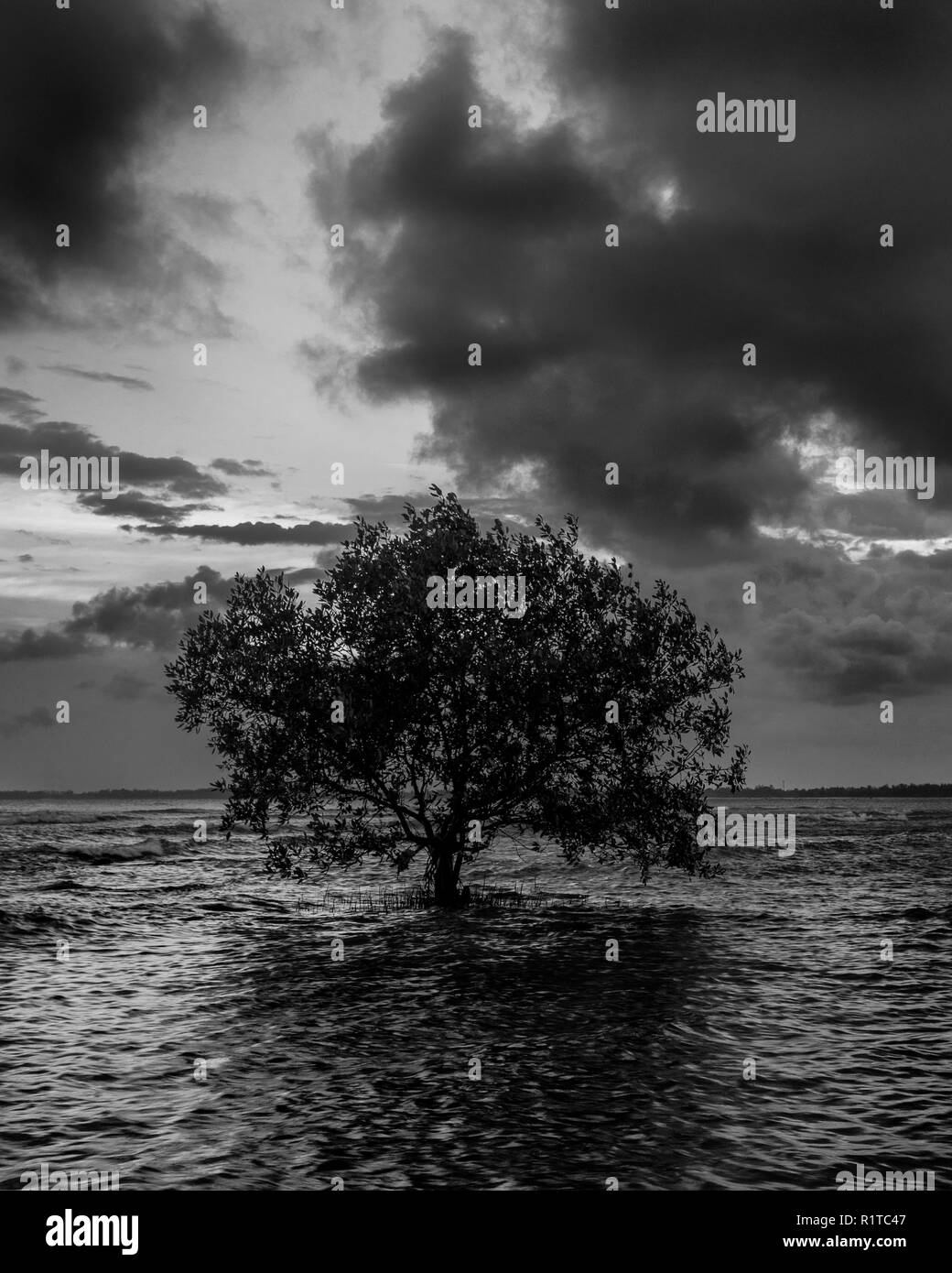 Minimalist black and white image of a tree at the beach during low tide with dark cloudy sky - Stock Image