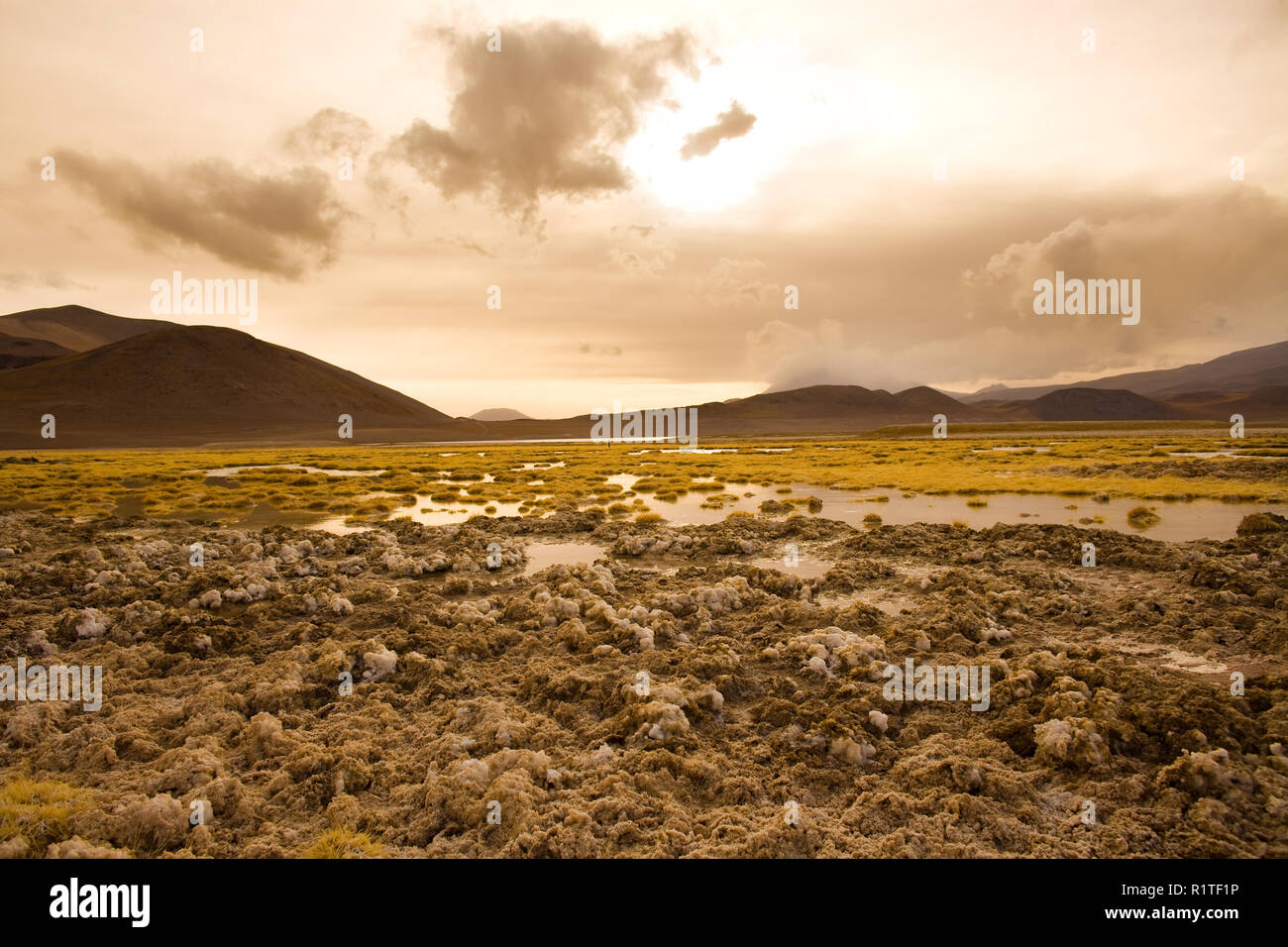 Salt crust at the shore of Lagoon and salt lake Tuyajto at an altitude of 4300m, Altiplano (high Andean Plateau), Los Flamencos National Reserve, Atac - Stock Image